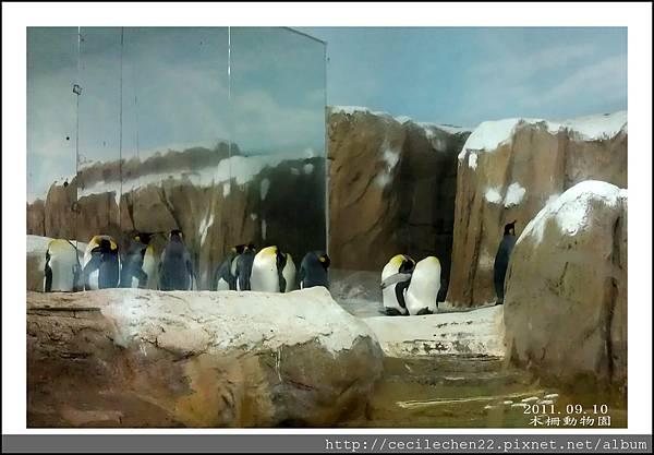 木柵動物園__企鵝_20110910.jpg