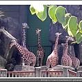 木柵動物園__長頸鹿_20110910.jpg