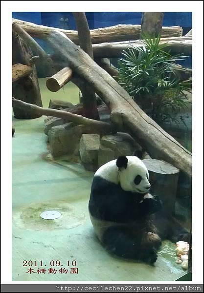 木柵動物園__貓熊2_20110910.jpg