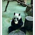 木柵動物園__貓熊_20110910.jpg