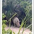 木柵動物園_白犀牛_20110910.jpg