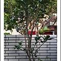 新竹柚子樹_201107.jpg