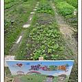 開心農場1.jpg