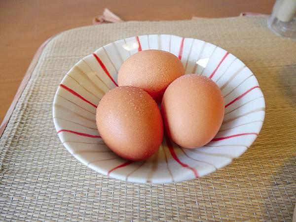 動物福利蛋