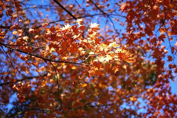 【2012*韓國*】內藏山國立公園 ~ 美麗楓葉