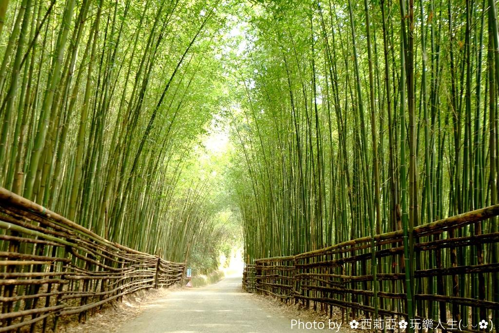 「竹林綠色隧道」的圖片搜尋結果