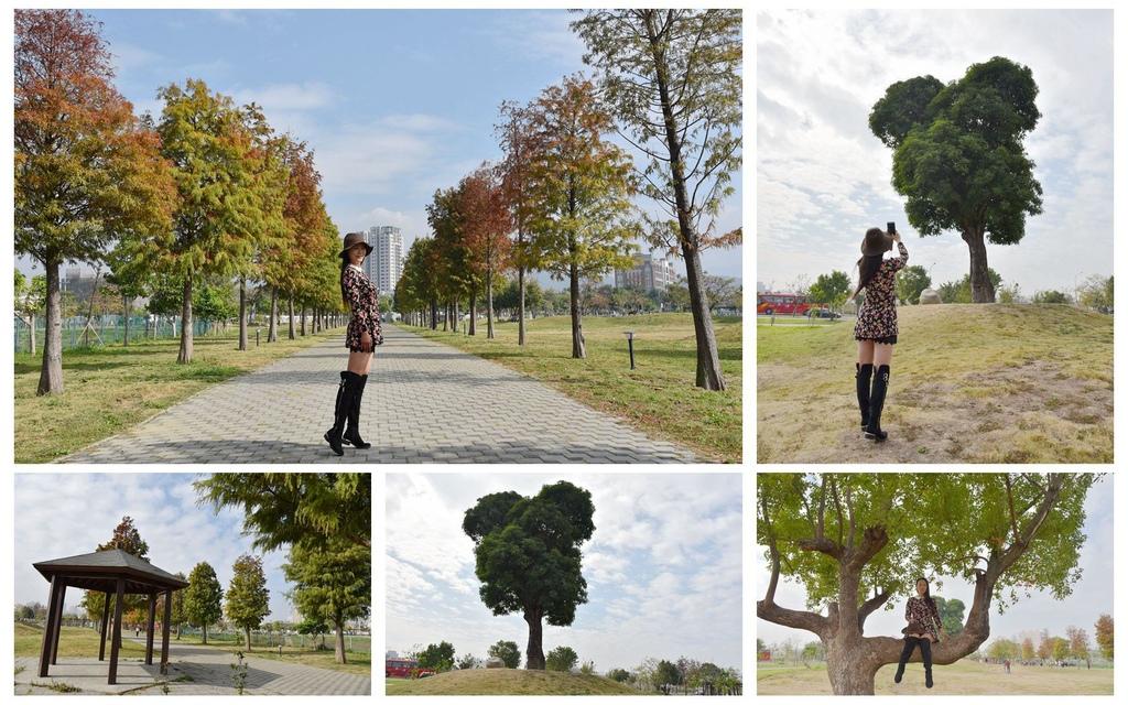 【台中。北屯區】網美打卡新亮點『南興公園』逗趣米奇樹、落羽松大道都是不可錯過美好印象