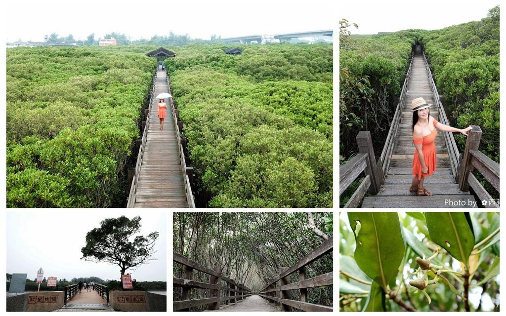 【新竹。新豐鄉】紅毛港紅樹林生態遊憩區/北台灣唯一水筆仔與海茄苳混生/紅樹林自然生態區