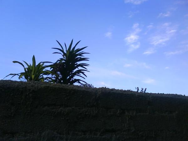 围墙外的世界