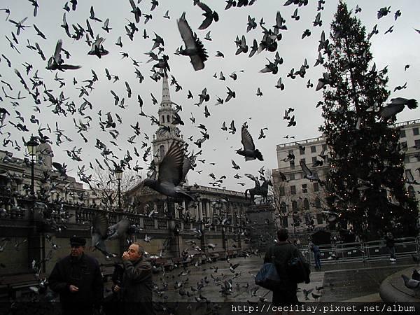 01 06 -3 特拉法加廣場的鴿子