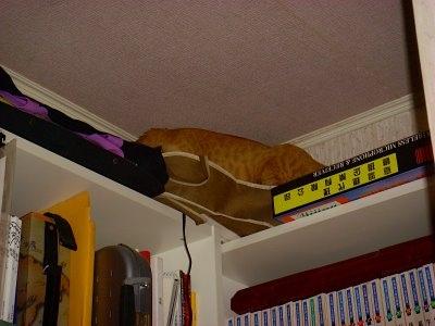 貓咪真的很會躲在很奇妙的地方
