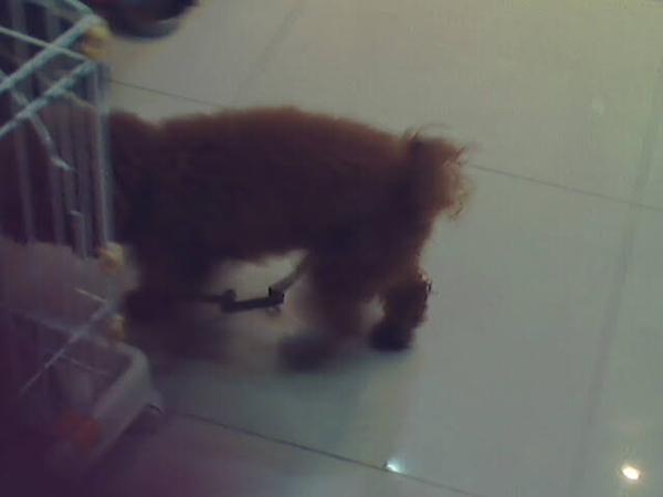 蛋糕店裡的小狗...  一開始好害羞