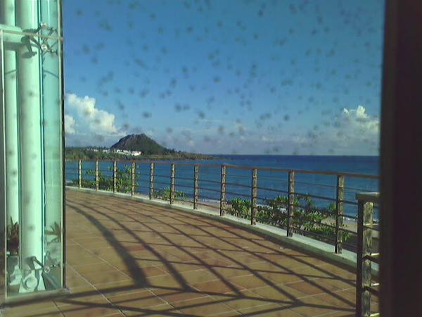 夏都的海景