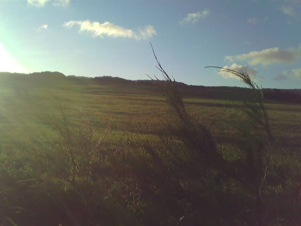 風吹沙再走上斜坡... 一路上都是這麼漂亮的草原