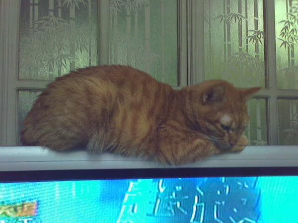 柳: 你們看星光大道~我睡覺~