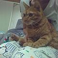 柳丁是小寶貝~ 以後姊姊回台北照顧你喔^^