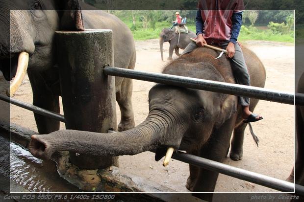 elephant020