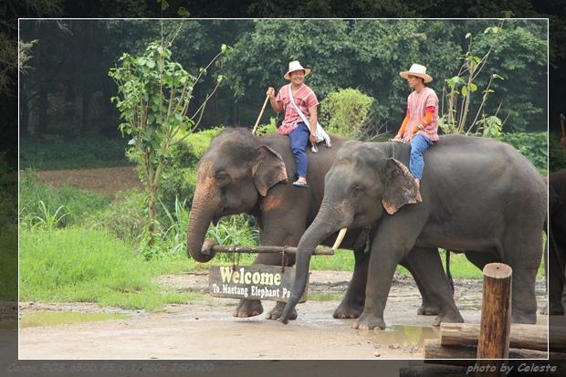 elephant034