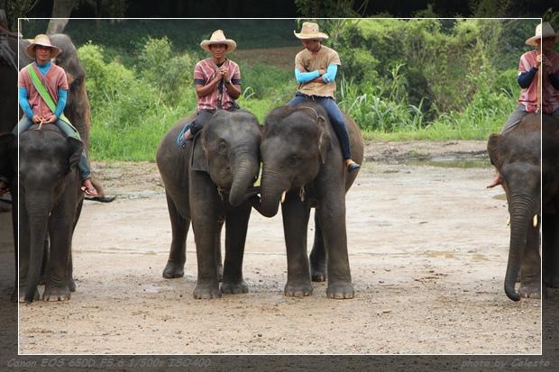 elephant033
