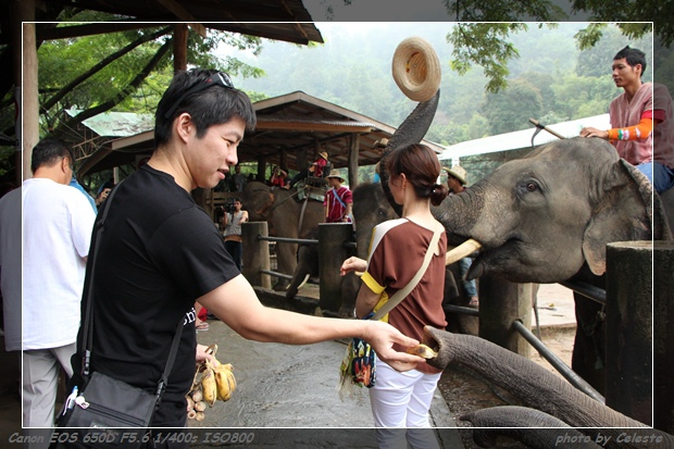 elephant018