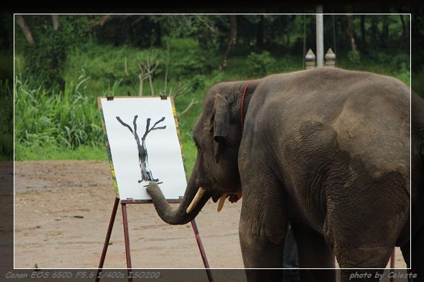 elephant042