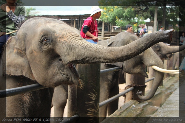 elephant022