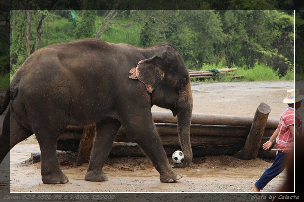 elephant015