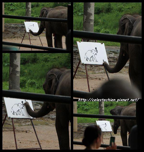 elephantcollage01