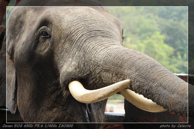 elephant027