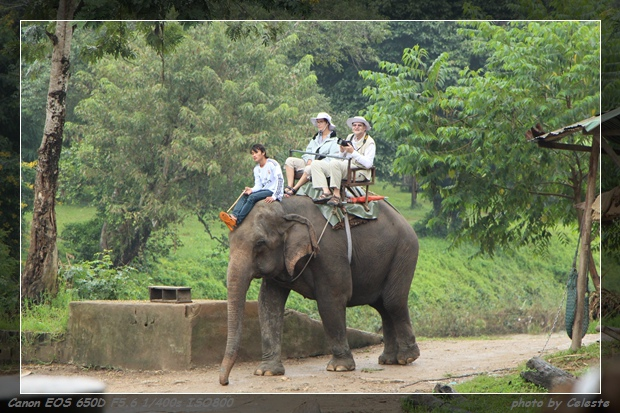 elephant009