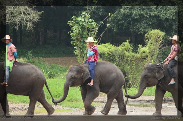 elephant035