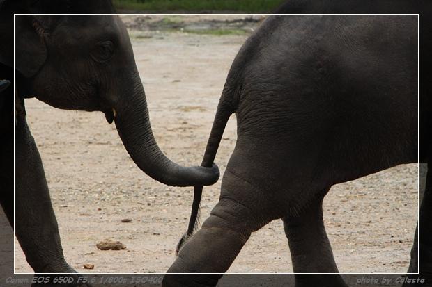 elephant037