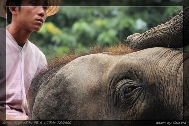 elephant032