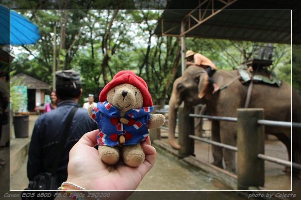 elephant046