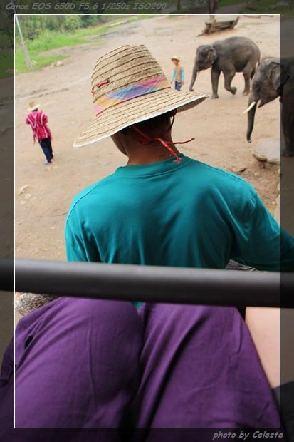 elephanttall09