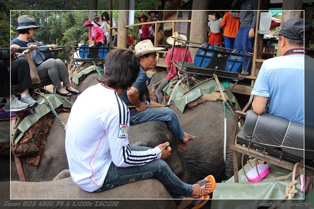 elephant059