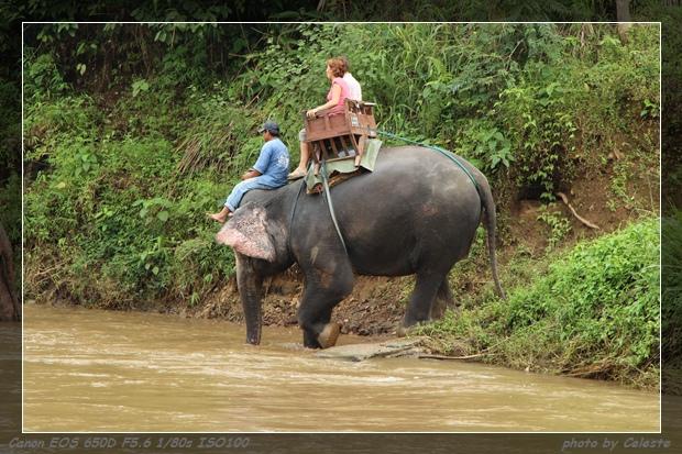 elephant107