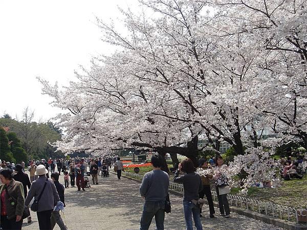 京都府立植物園(櫻林六).jpg