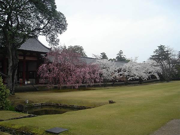 奈良東大寺(二).jpg