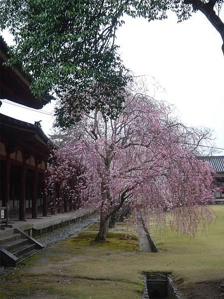 奈良東大寺(三).jpg