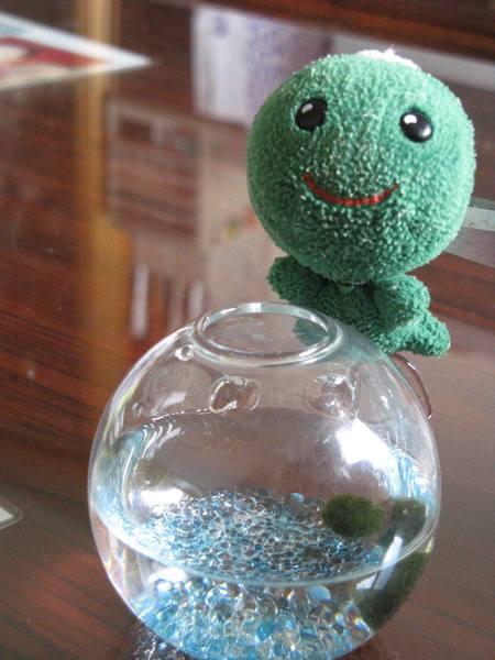海藻球和綠藻球