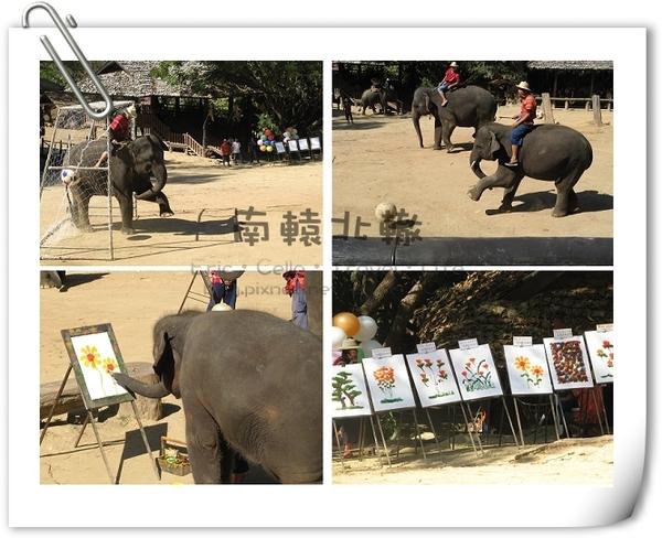 湄沙大象學校