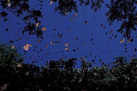 702茂林紫蝶幽谷2.jpg