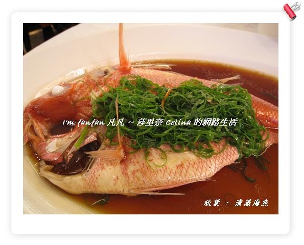 經理推薦來自澳洲進口的清蒸魚