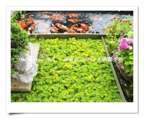 主人很用心佈置的小花園.jpg