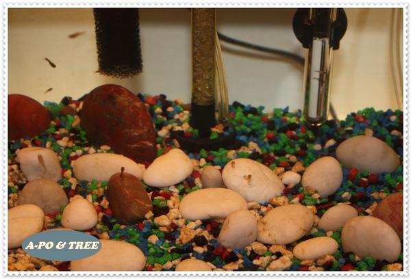 littlegubbies01.jpg