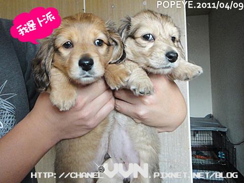 popeye-20110409-003.jpg