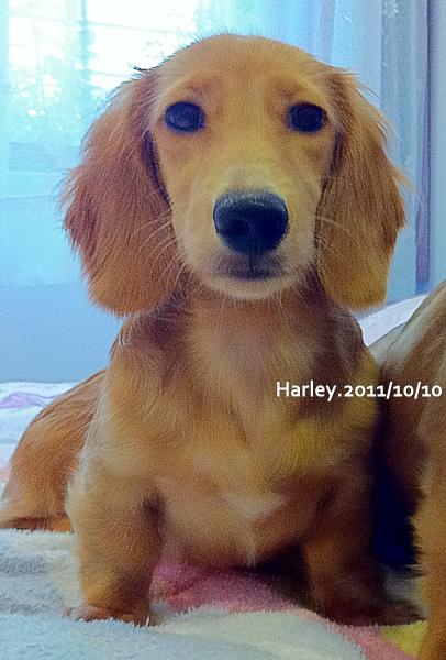 harley-1114.jpg