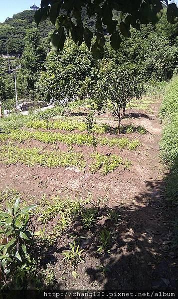 澆完水的菜圃.jpg