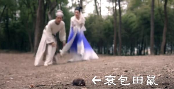 青丘狐傳說_12